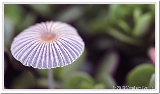Mushroom_1_IMG_0123C